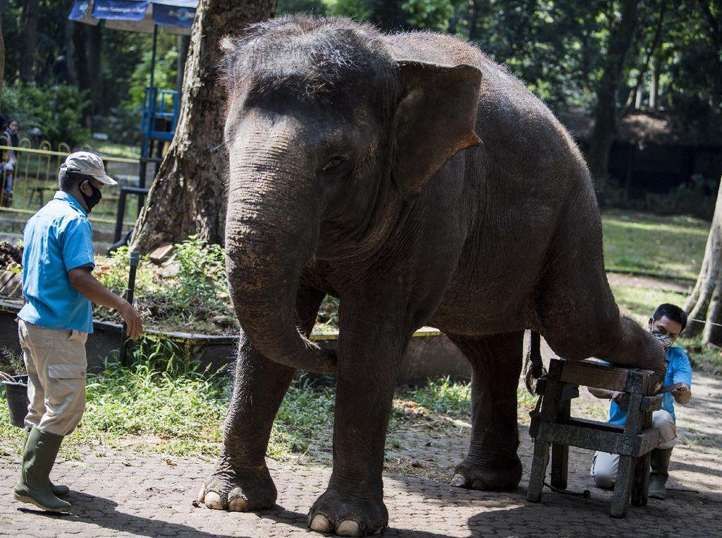 Gajah, Mamalia yang Gampang Baper dan Punya Ingatan Kuat