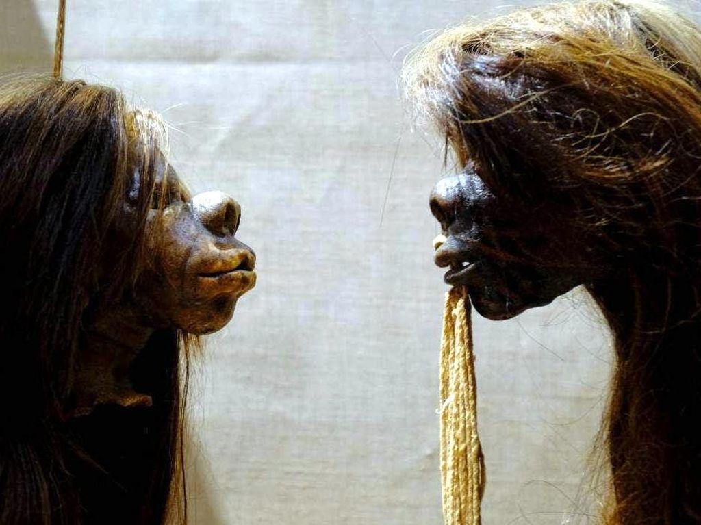 Museum Inggris Tak Lagi Pajang Kepala Manusia yang Diawetkan