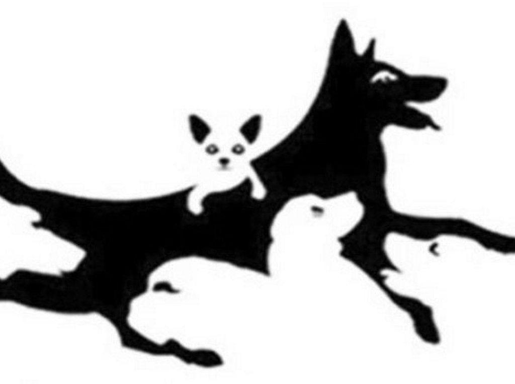 Tes Kepribadian: Ada Berapa Anjing yang Kamu Lihat Dalam Gambar?