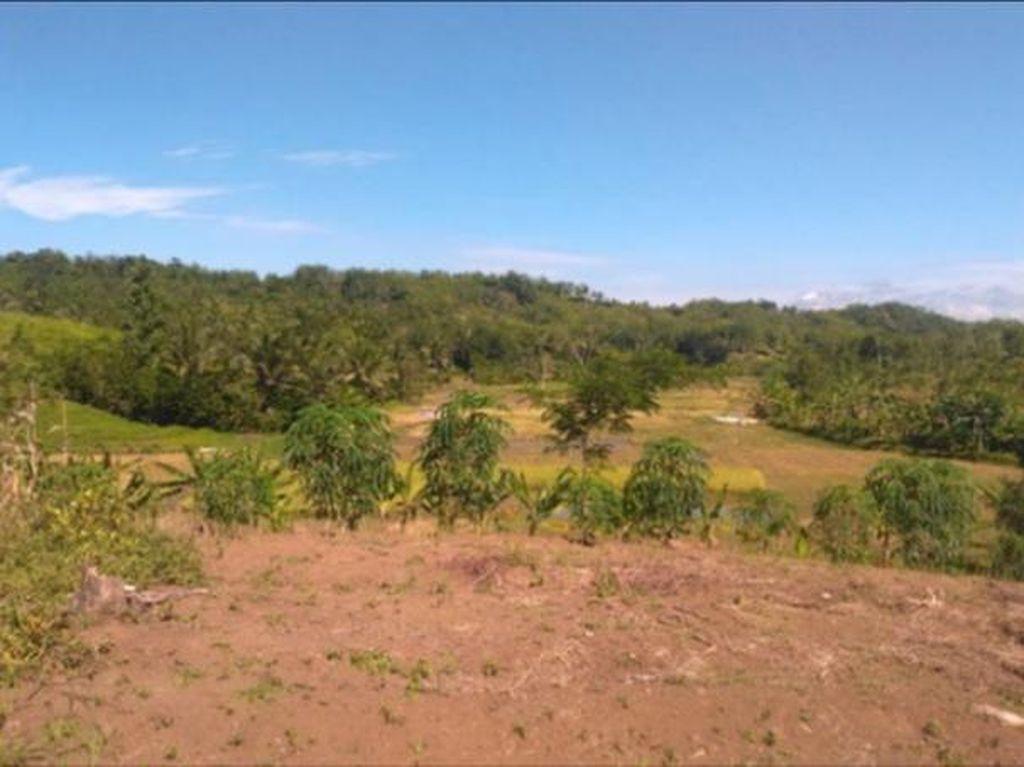 Urgensi Transformasi Pengelolaan Hutan Jawa