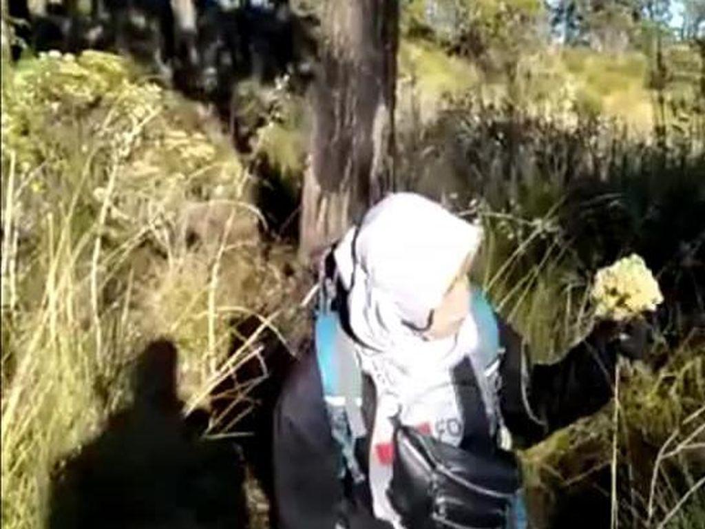 Viral Aksi Panen Bunga Edelweis di Gunung Lawu oleh Pendaki Perempuan