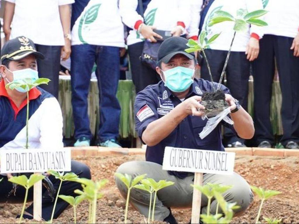 Gubernur Sumsel Minta Petani di Banyuasin Tanam Porang