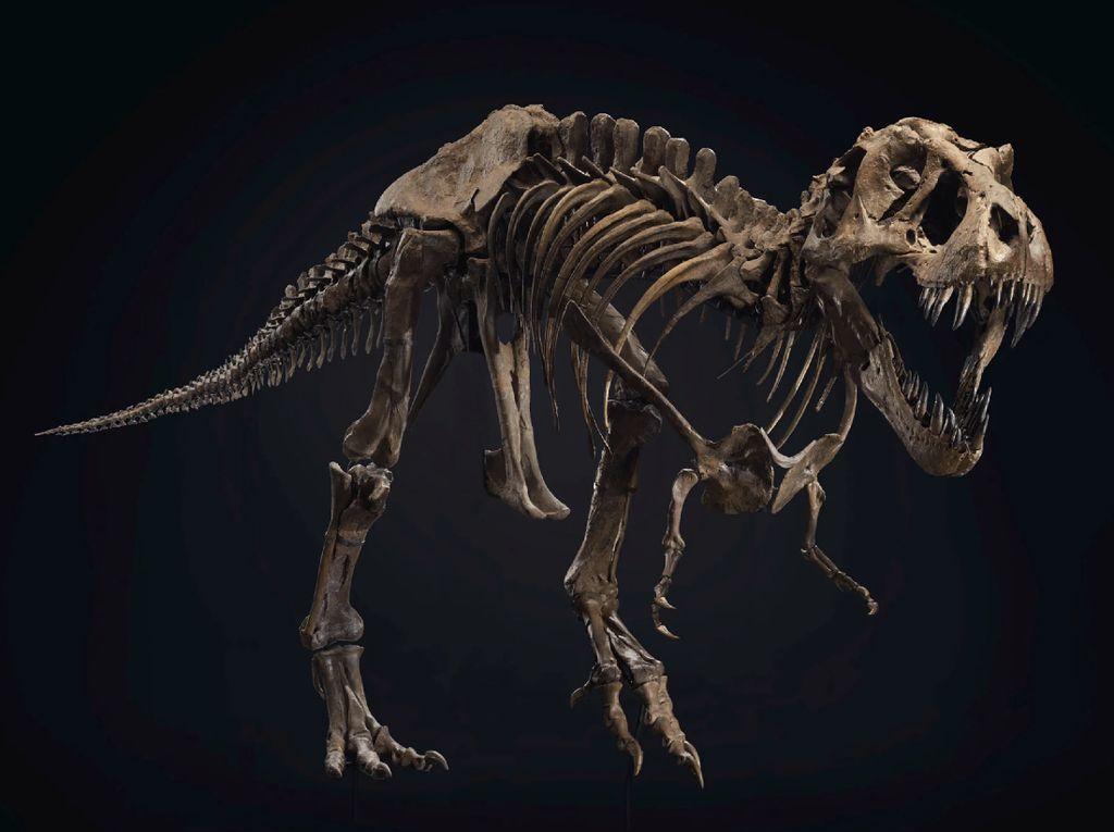 Kerangka Lengkap T-rex Dijual Rp 89 Miliar, Mau Beli?