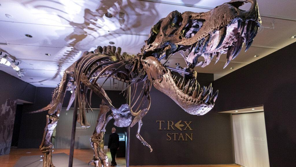 Kerangka T-Rex Terbesar Ini Akan Dilelang