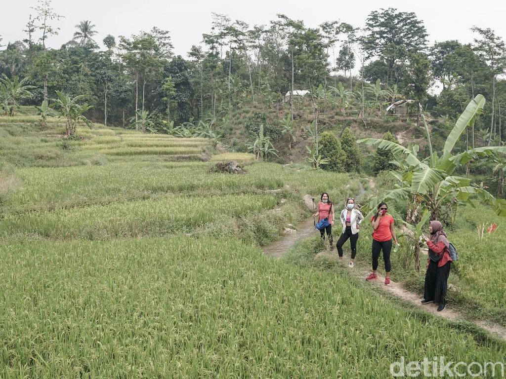 Hiking Sentul Upaya Warga Cari Penghasilan Setelah Kehilangan Sawah