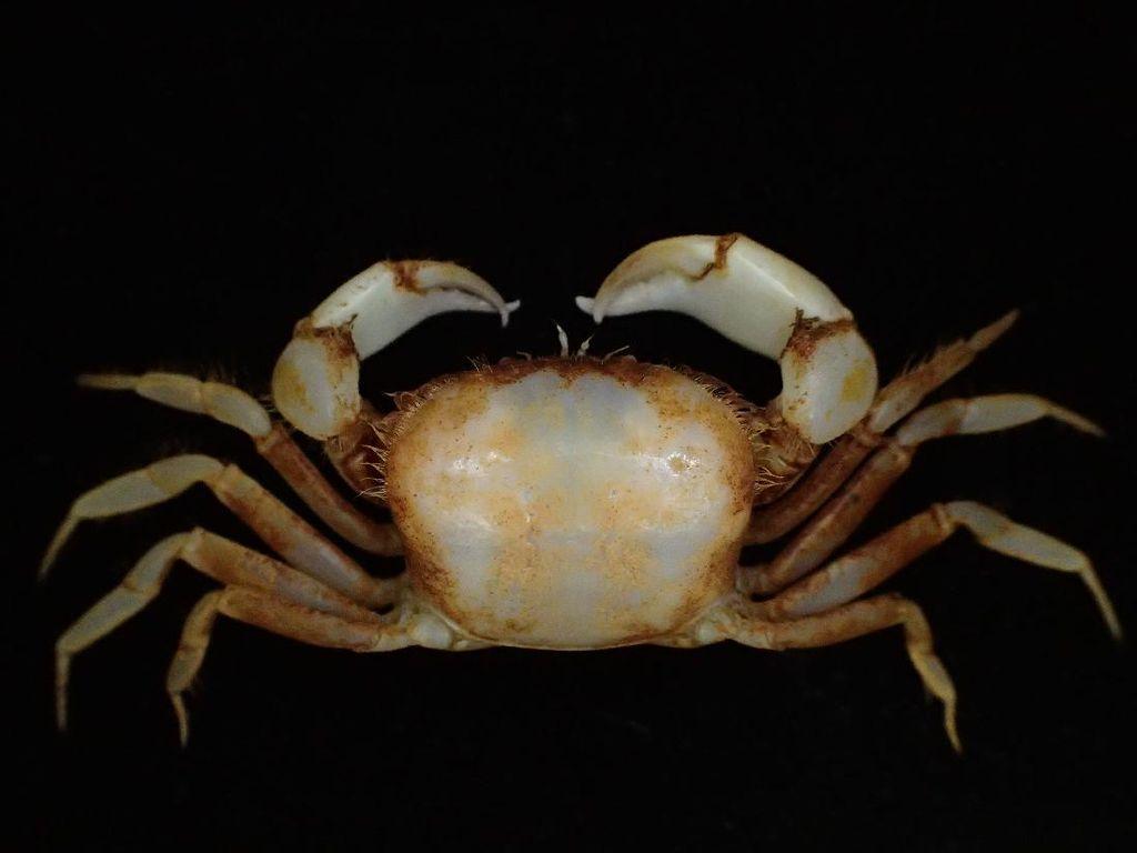 Foto: Memiliki Bentuk Unik, Ini 5 Spesies Biota Laut Baru di Indonesia