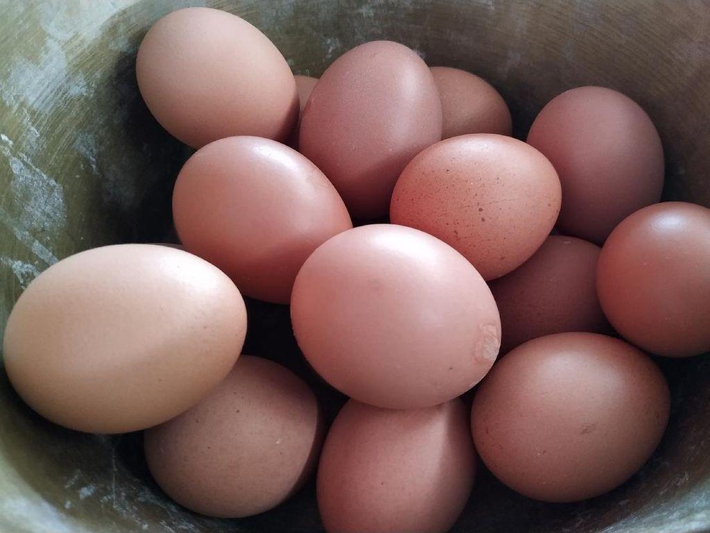 Harga Turun, Telur Grade A Malah Langka