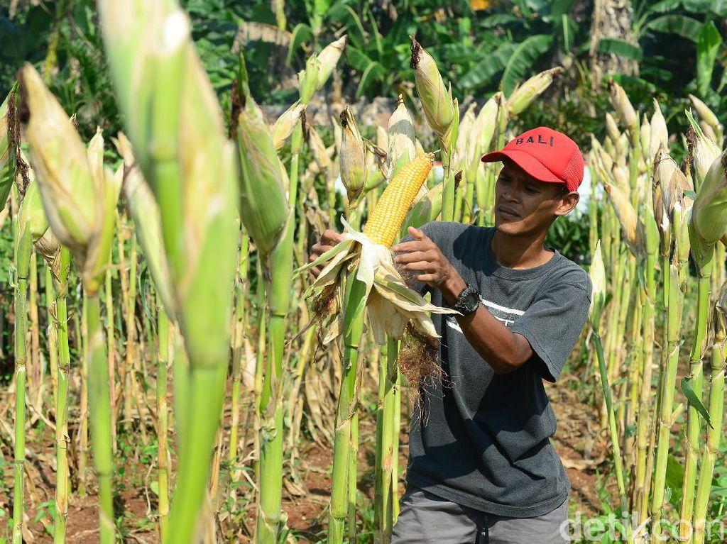 Hari Tani Nasional dan Sejarah Pertanian Indonesia