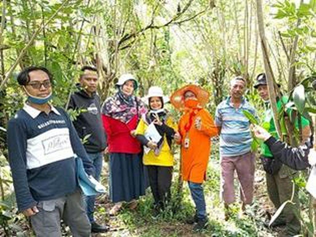 Petani di Sumatera Utara Kembali Kembangkan Vanili Lokal