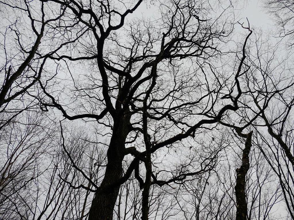 Hutan Terangker yang Punya Gerbang Dunia Lain