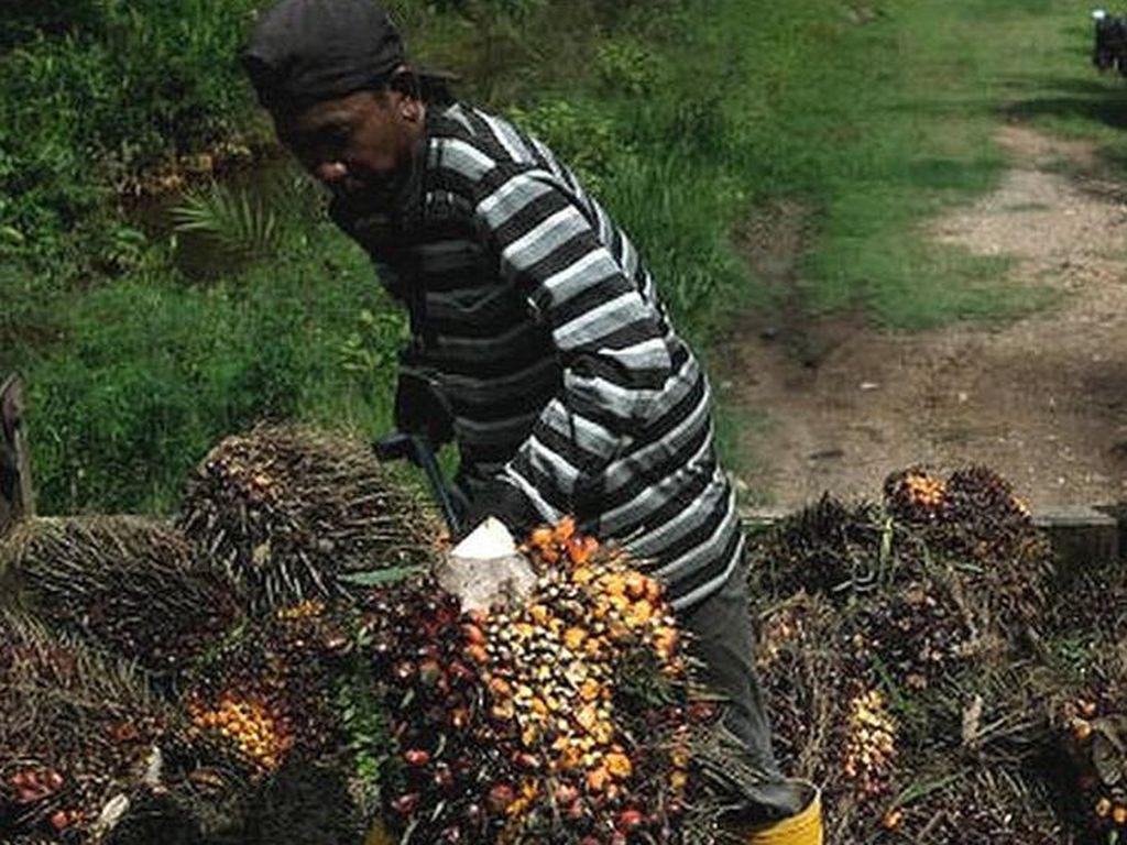 Perkebunan Sawit Malaysia Kekurangan Tenaga Kerja, Ada Koridor Khusus TKI?