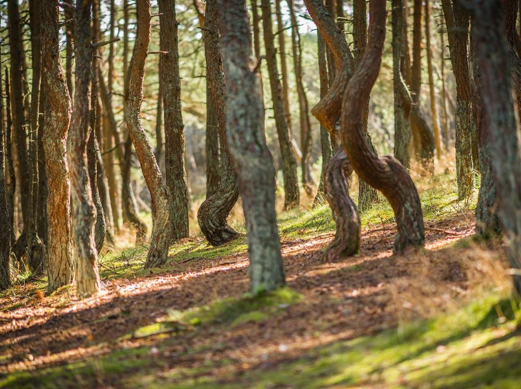 Potret Pohon yang Menari di Rusia