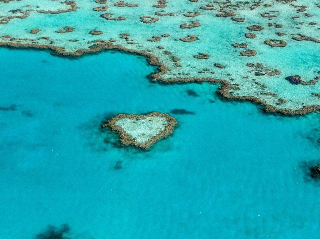 Status Warisan Dunia Great Barrier Reef Terancam Dicabut, Nih