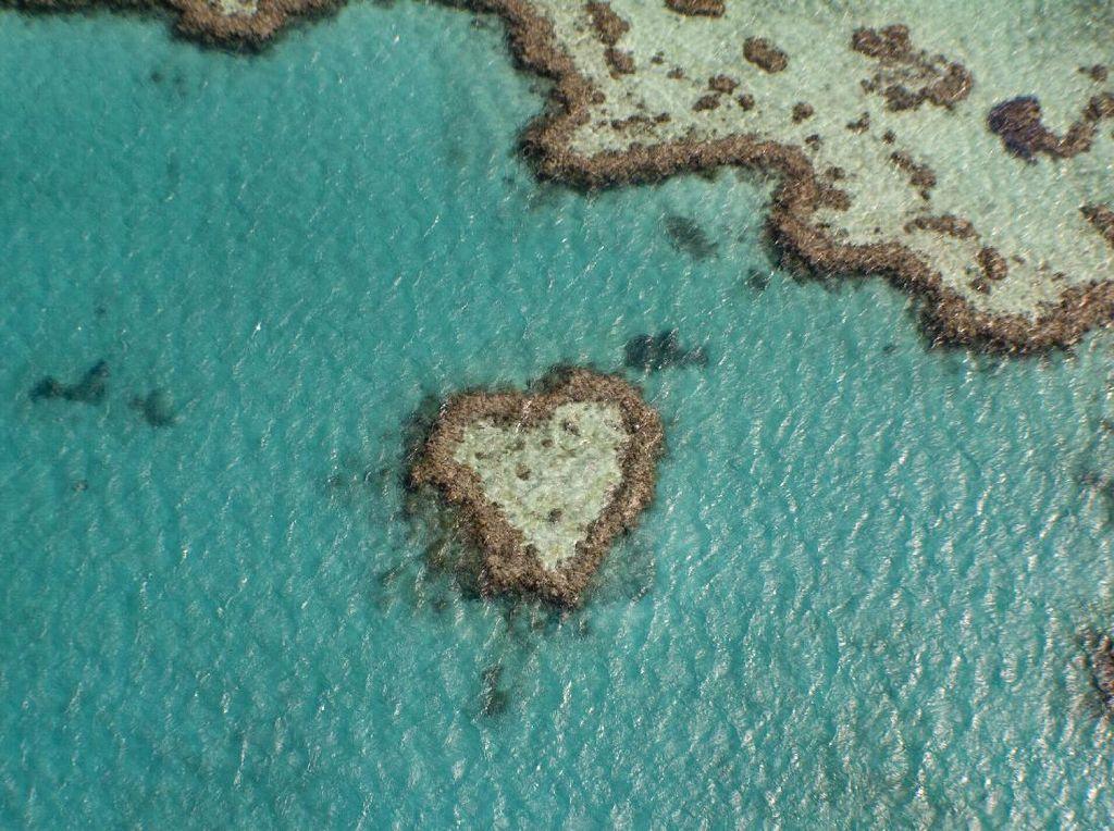 Great Barrier Reef Kehilangan 50% Populasi Karang dalam 3 Dekade