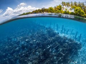 Rumput Laut Selamatkan Kocek Warga Nusa Penida