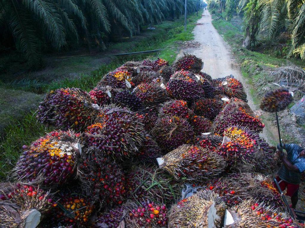 Pembakaran Lahan Sawit di Papua, Komisi IV Bakal Panggil KLHK