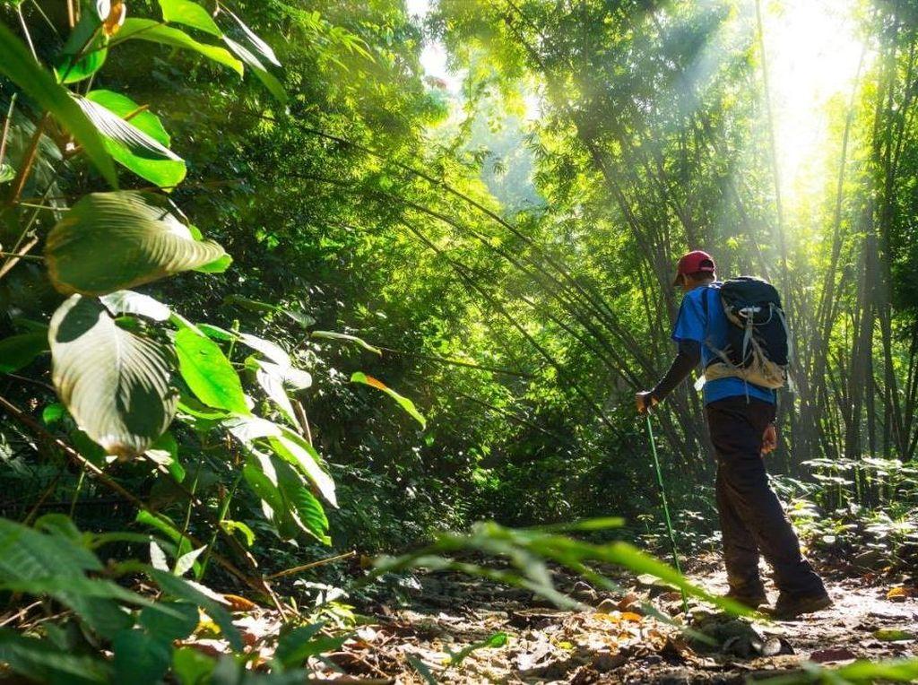 Rekomendasi Wisata Alam Sambil Mengenal Kekayaan Flora dan Fauna