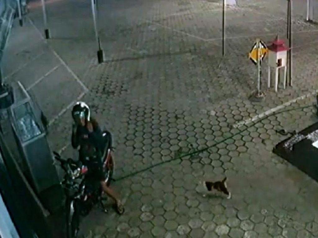 Viral Pemuda di Bondowoso Tiap Malam Beri Makan Kucing Liar