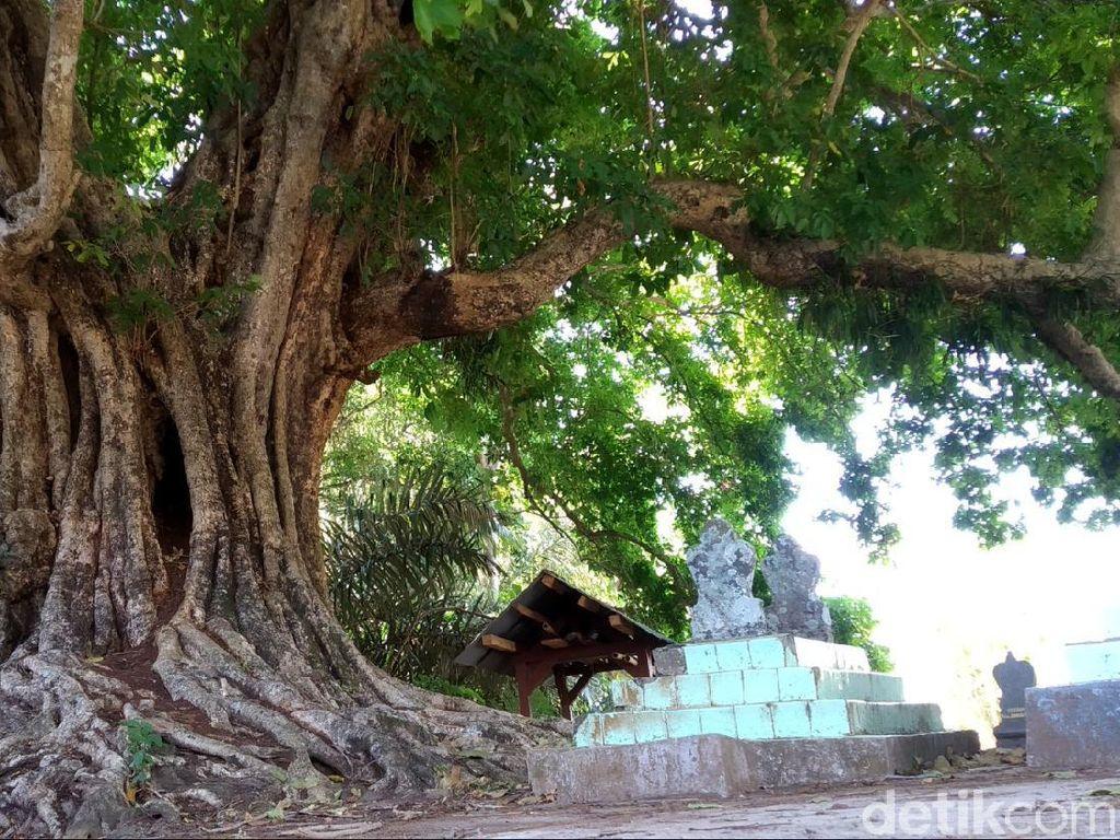 Cerita Perempuan Cantik-Kerajaan Musang di Pohon Kosambi Tertua di Kuningan