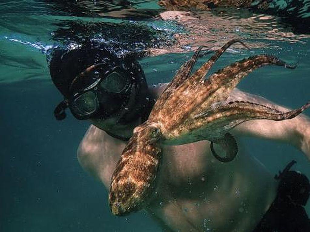 Kisah Kedekatan Penyelam dan Gurita di Bawah Laut