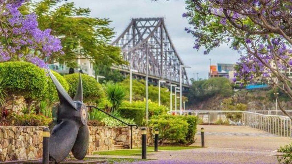 Melihat Keindahan Pohon Jacaranda di Australia