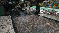 Daya Tarik Wisata Sungai Water Gong Klaten Jawa Tengah