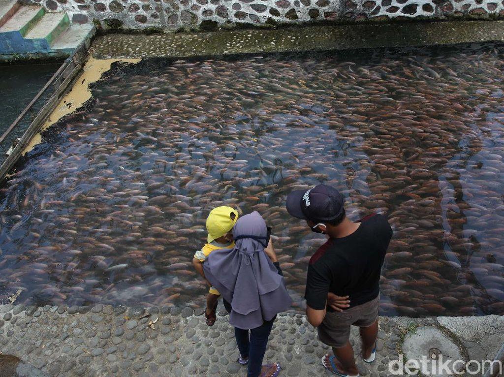 Water Gong, Ketika Sungai Kotor Disulap Jadi Wisata Penuh Ikan