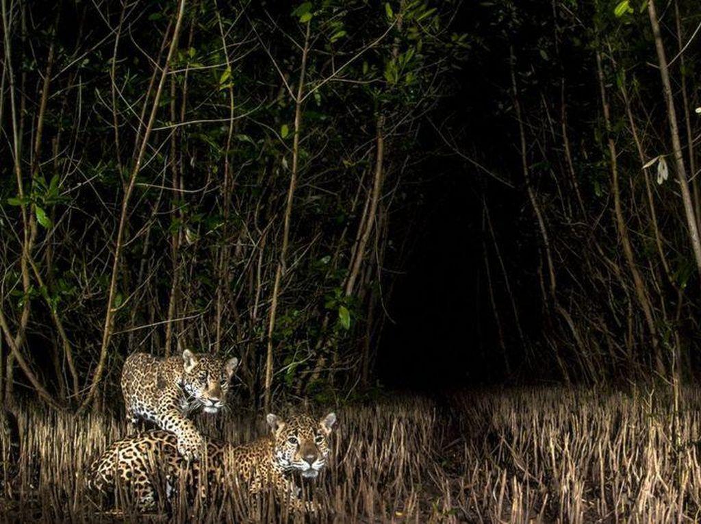Kontes Foto Mangrove: dari Meksiko Sampai Indonesia