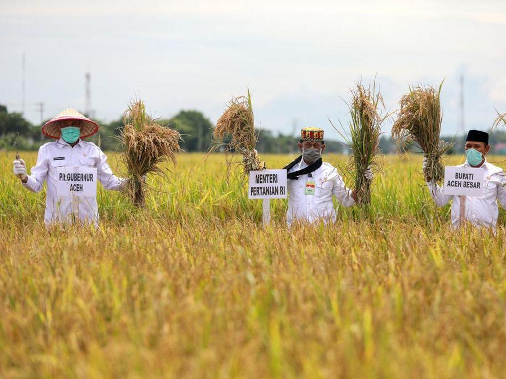 Pandemi Corona, Mentan Dorong Tingkatkan Produksi Beras di Sultra