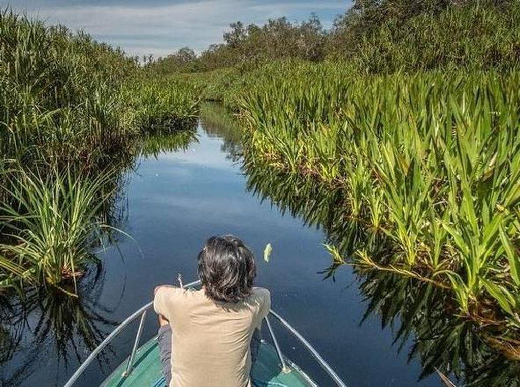 Coba Ekowisata di Tanjung Puting, Begini Keseruannya!