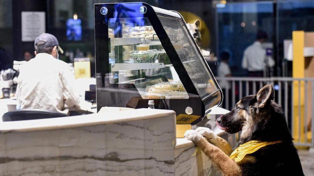 Potret Kafe Anjing Pertama di Arab Saudi