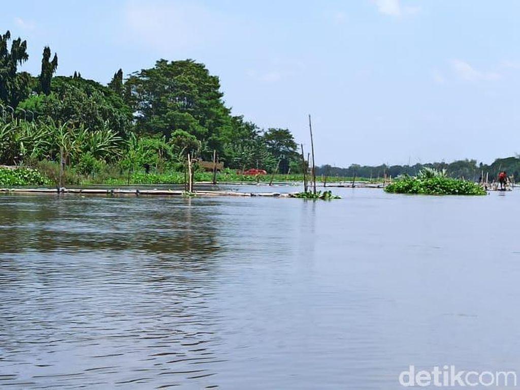 Viral Penampakan Buaya di Sungai Brantas Kediri, Benarkah Berwarna Putih?