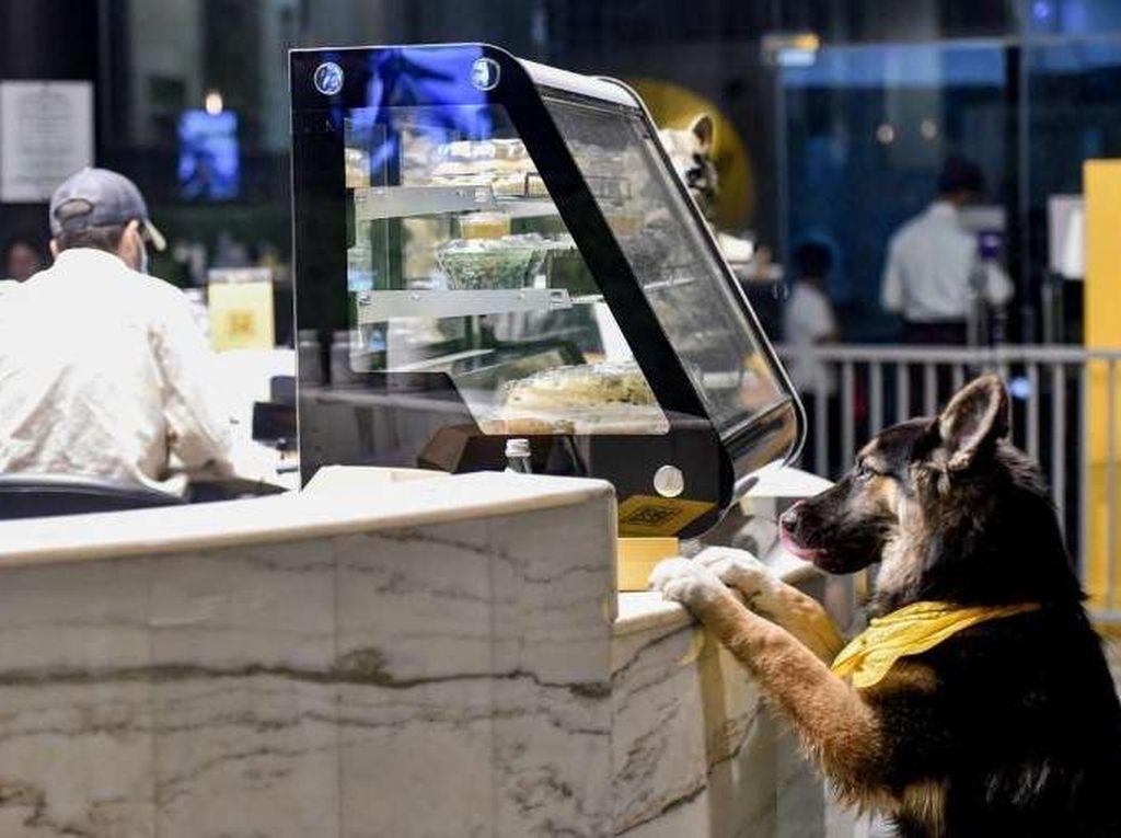 Ini Kafe Anjing Pertama di Arab Saudi yang Baru Saja Buka