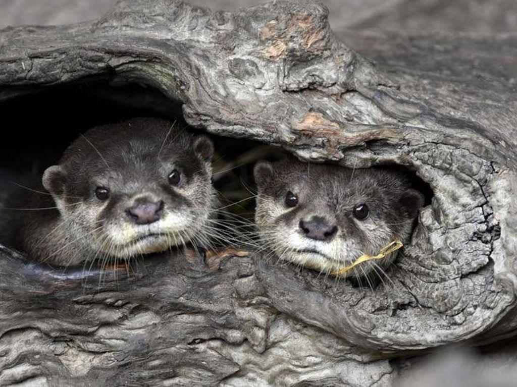 Foto: Bayi-Bayi Hewan Menggemaskan di Kebun Binatang Taipei