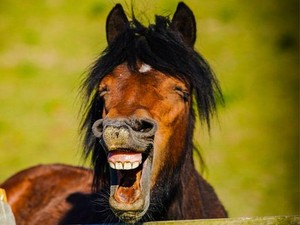 Foto-foto Hewan Paling Lucu: dari Kelinci Si Ratu Sensasi Sampai Kuda Tertawa