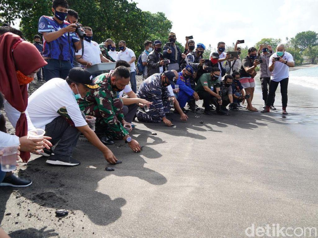 TNI Tanam 750 Terumbu Karang dan Lepas 200 Ekor Tukik di Lombok