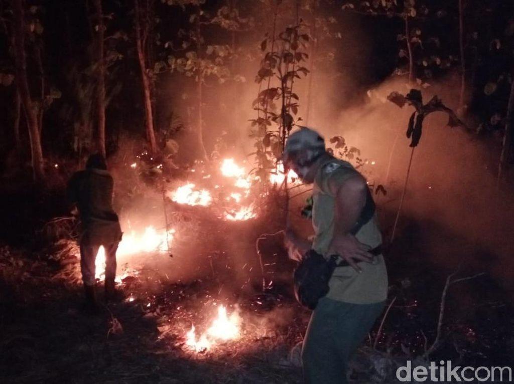 Lagi, Hutan Baluran di Situbondo Seluas 2,5 Hektare Terbakar
