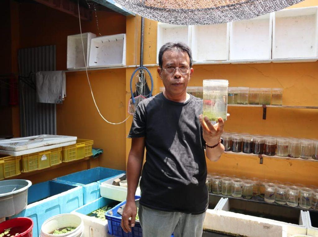 Kisah Sarjana Perikanan Raup Puluhan Juta dari Bisnis Ikan Cupang