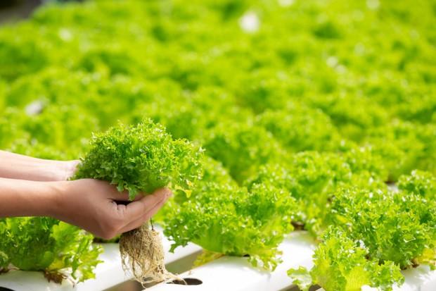Karena masih awal pilih tanaman yang mudah dirawat kemudian baru yang sulit.