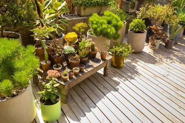 Tempat kebun sangat bepengaruh dan harus diperhatikan sesuai kebutuhan.