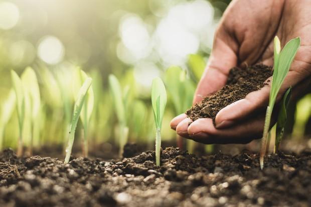 Pupuk akan sangat berpengaruh untuk menyuburkan tanaman maka jangan berlebihan memakainya.