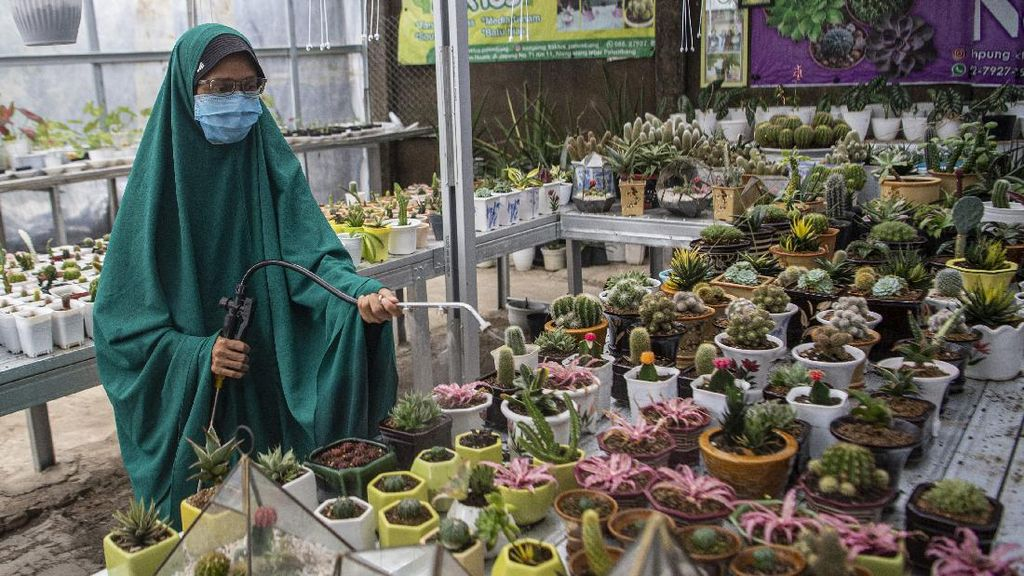 Penjualan Kaktus Mini Meroket