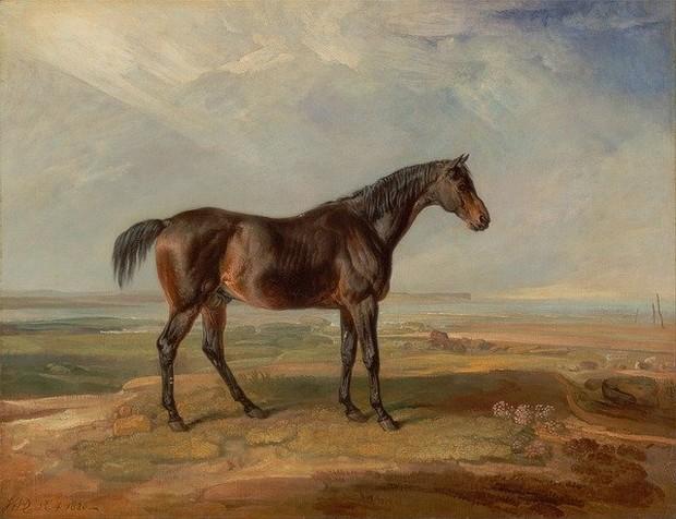 Minyak Kuda