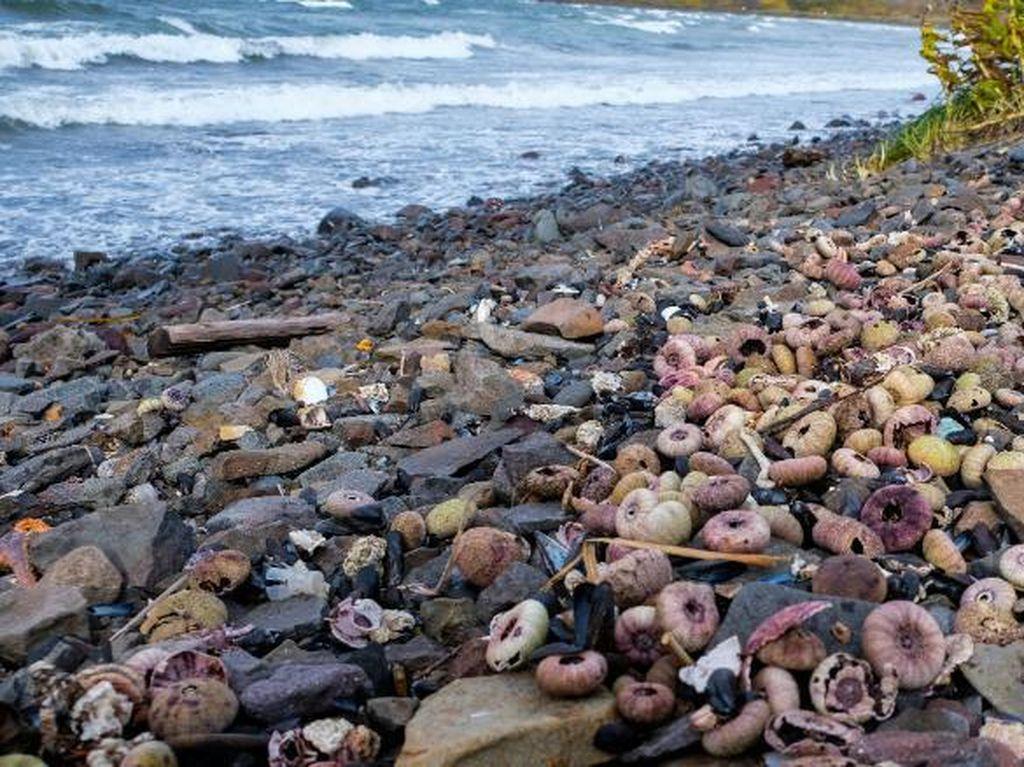 Misteri Kematian Massal Hewan Laut di Rusia