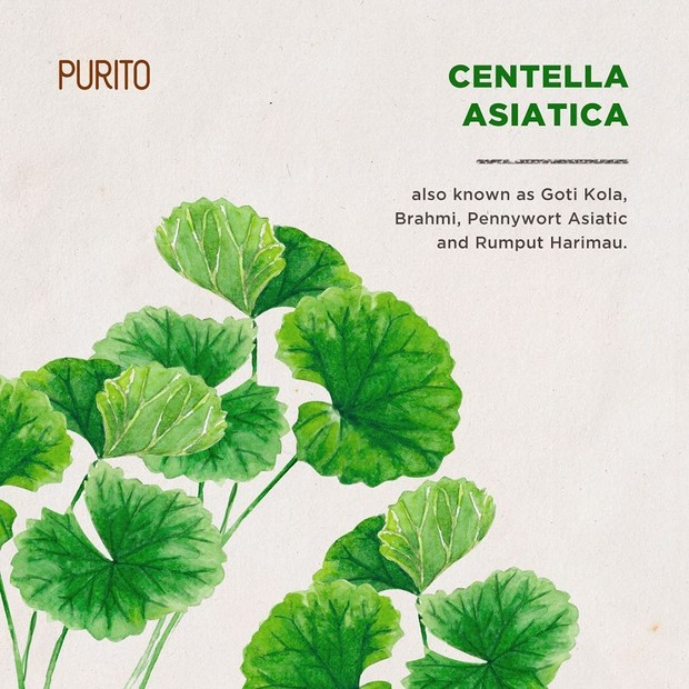 Kandungan centella green pada produk sunscreen PURITO.