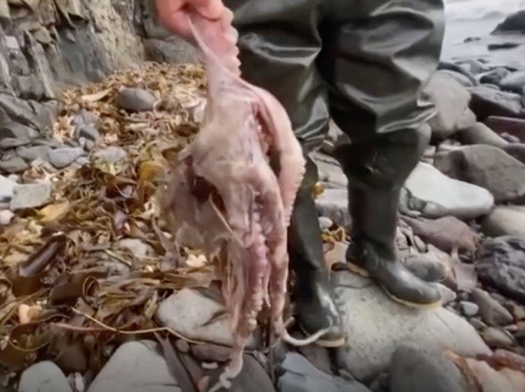 Ratusan Biota Laut Mati di Pantai Rusia