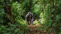 Uganda Juga Mulai Buka Pagar untuk Turis