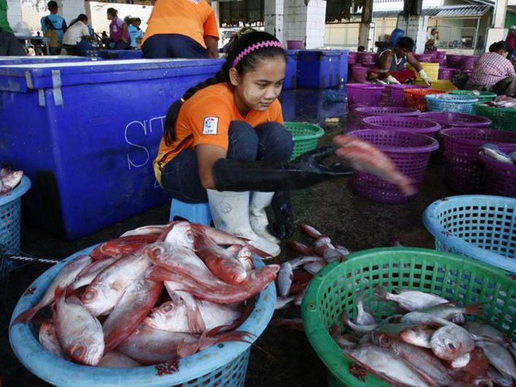 Masih Pekerjakan Anak, Industri Seafood Thailand Kembali Dikritik