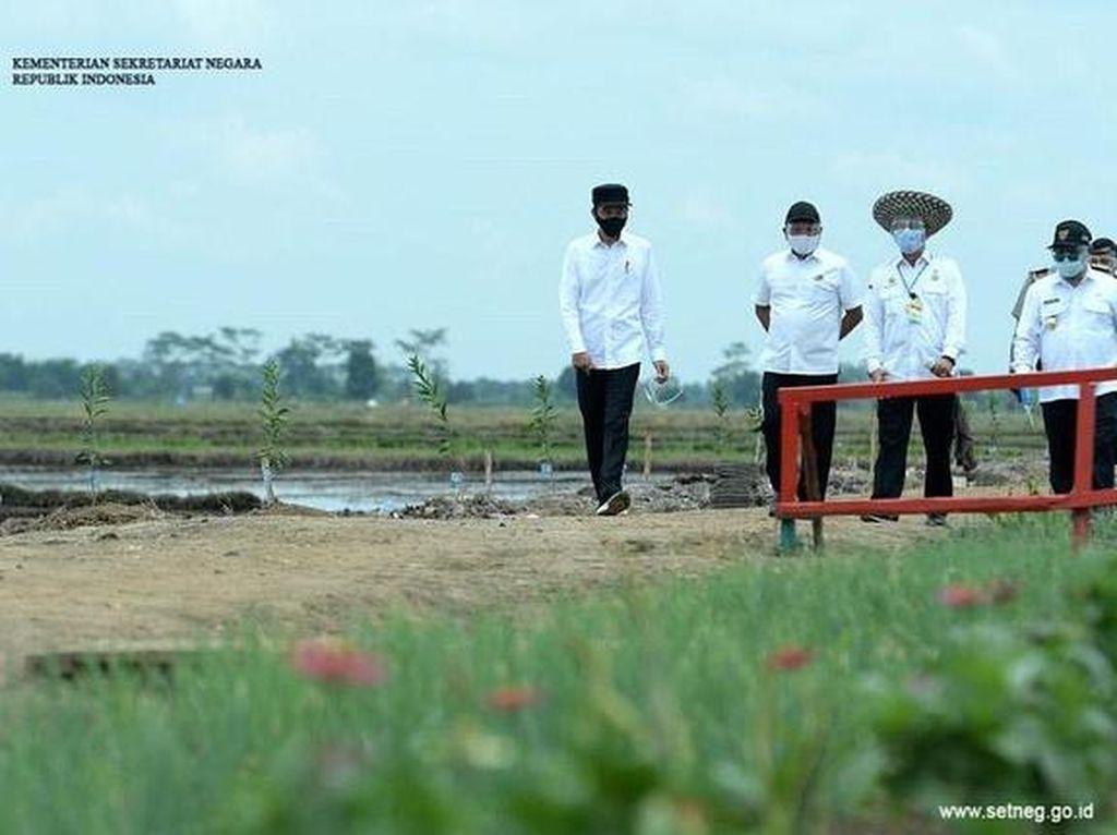 Tagar #Bebek dan #Itik Trending, Ini yang Dikunjungi Jokowi di Kalimantan