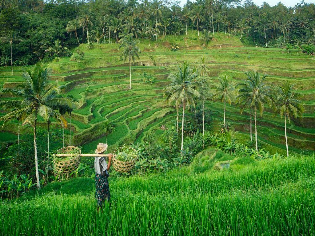 WNA Kerja di Bali Pakai Visa Turis, Netizen: Imigrasi Gerak Cepat, dong!